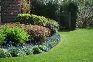 North Vancouver Lawn & Garden Care
