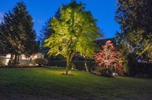 Garden Landscape Lighting Design Vancouver