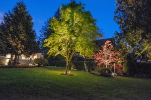 Garden Landscape Lighting Design Vancouver